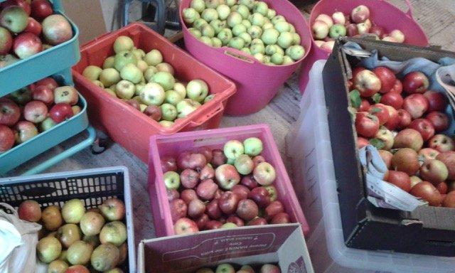 1a Apples