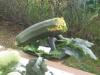 Vegetable Monster