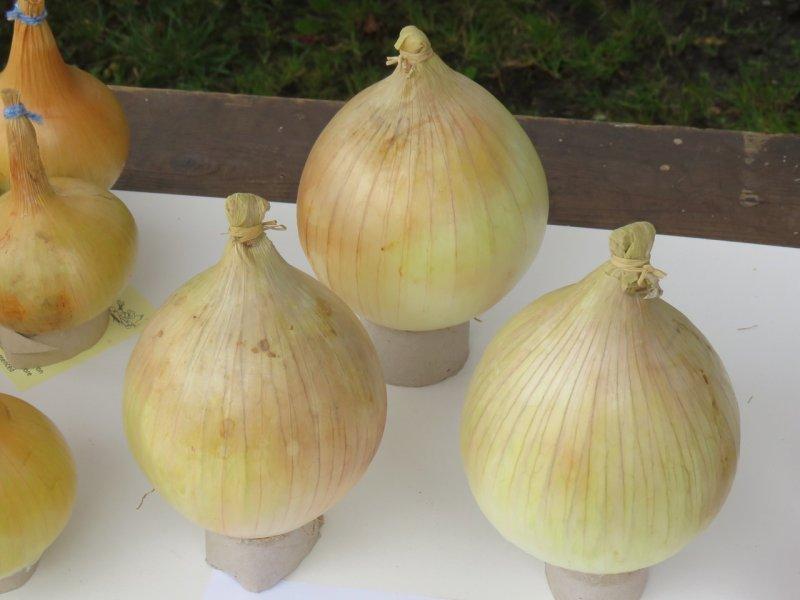 06-Winning-onions
